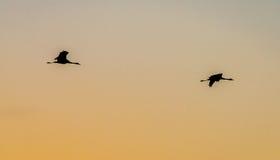 Fåglar i skyen Royaltyfri Foto