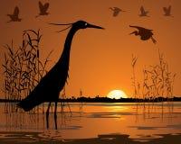 Fåglar i solnedgångträskillustration vektor illustrationer