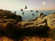 Fåglar i stranden Arkivbild