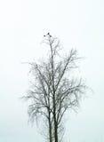 Fåglar i träd övervintrar dimmig Nederländerna Royaltyfri Fotografi