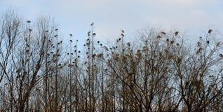 Fåglar i trädet Arkivfoto