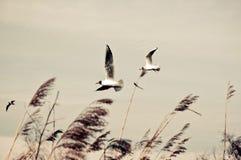 Fåglar i vinden arkivfoto