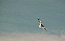 Fåglar i vinden Arkivfoton