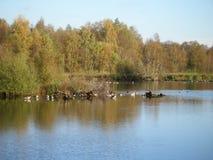 Fåglar i Zwillbrock Royaltyfri Bild