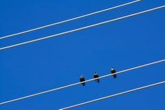 fåglar isolerade vit tråd Royaltyfri Bild