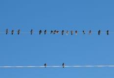 fåglar isolerade vit tråd Arkivbilder