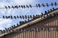 fåglar isolerade vit tråd Arkivfoton