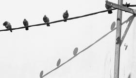 fåglar isolerade vit tråd Arkivfoto