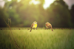 fåglar isolerade vit tråd Fotografering för Bildbyråer