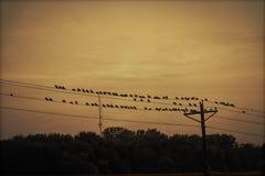 fåglar isolerade vit tråd royaltyfria bilder