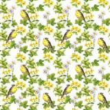 Fåglar - löst gräs, blommor seamless blom- modell mörk paper vattenfärgyellow för forntida bakgrund Fotografering för Bildbyråer