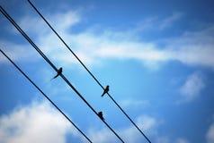 fåglar little tre Fotografering för Bildbyråer