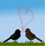 Fåglar med förälskelse Arkivfoto