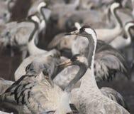 fåglar migrate royaltyfri fotografi