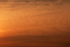 Fåglar mot orange himmel Arkivfoto