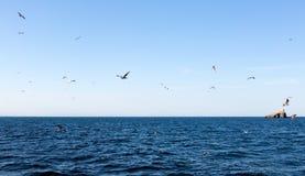 Fåglar nära Isla Grosa - spansk ö vid La Manga Arkivfoto