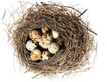 Fåglar nest med ägg på den vita bakgrunden () Royaltyfri Bild