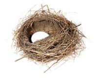 Fåglar nest med ägg på den vita bakgrunden (isolerat) Arkivbilder