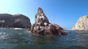 Fåglar och en sjölejon över det krabba havet i den Ballestas ön, Peru arkivfilmer