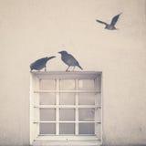 Fåglar och fönster vektor illustrationer