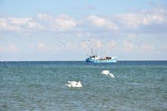Fåglar och fartyg royaltyfria foton