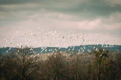 fåglar och himmel Arkivfoton