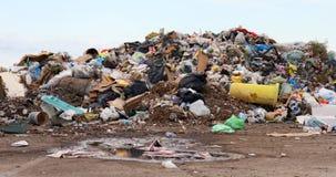 Fåglar och hundkapplöpning på nedgrävning av sopor Arkivfoto