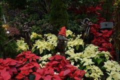 Fåglar och julstjärna Royaltyfria Bilder