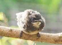 Fåglar och natur i morgonen Med den första solen av dagen royaltyfria bilder