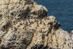 Fåglar och seagulls som sitter en vagga Royaltyfri Fotografi