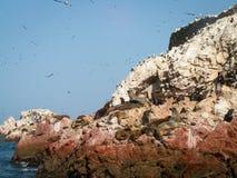Fåglar och sjölejon Ballestas Royaltyfria Bilder