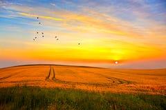 Fåglar och solnedgång Arkivbild