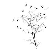 Fåglar och treesilhouettes Royaltyfria Bilder