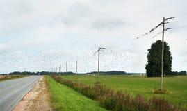 Fåglar ovanför vägen och fält Royaltyfri Foto