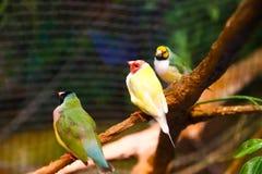 Fåglar på akvariet Dubai Arkivbilder