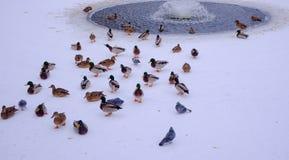 Fåglar på bakgrunden av en liten springbrunn royaltyfria foton