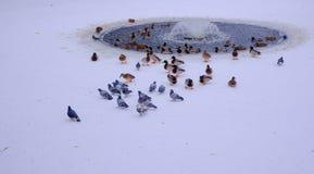 Fåglar på bakgrunden av en liten springbrunn royaltyfri bild