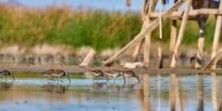 Fåglar på dammet Fotografering för Bildbyråer