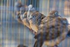 Fåglar på den Pasar Ngasem marknaden i Yogyakarta, centrala Java, in Royaltyfria Bilder