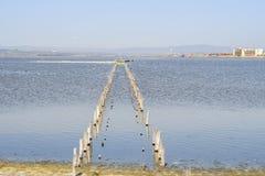 Fåglar på den salta sjön Arkivfoto