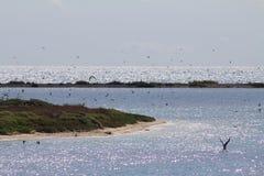 Fåglar på den torra Tortugas nationalparken Arkivbilder