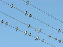 Fåglar på elektriska trådar Royaltyfri Foto