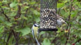 Fåglar på en birdfeeder arkivfilmer