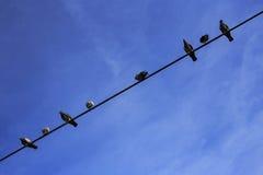Fåglar på en fodra Royaltyfria Foton
