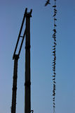 Fåglar på en kabel royaltyfri bild