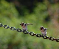 Fåglar på en kedja royaltyfri bild