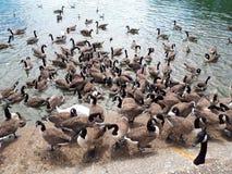 Fåglar på en sjö arkivfoto