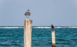 Fåglar på en stolpe Arkivfoto