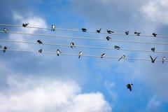 Fåglar på en tråd Fotografering för Bildbyråer