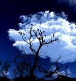 Fåglar på en Tree med Skybakgrund 5 Arkivbilder